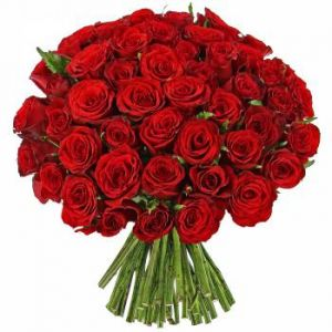 Roses rouges Passion